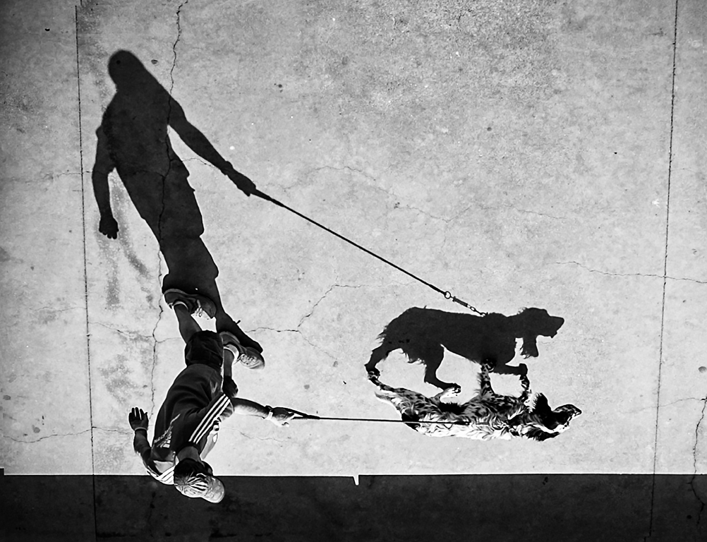 Home i gos