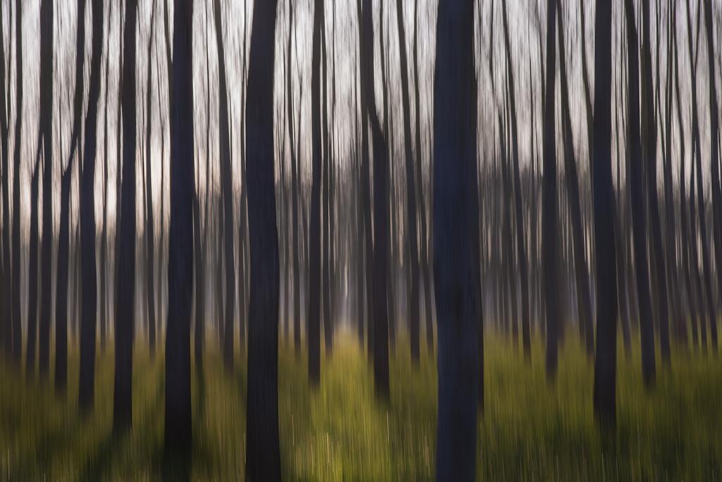 Bosc infinit