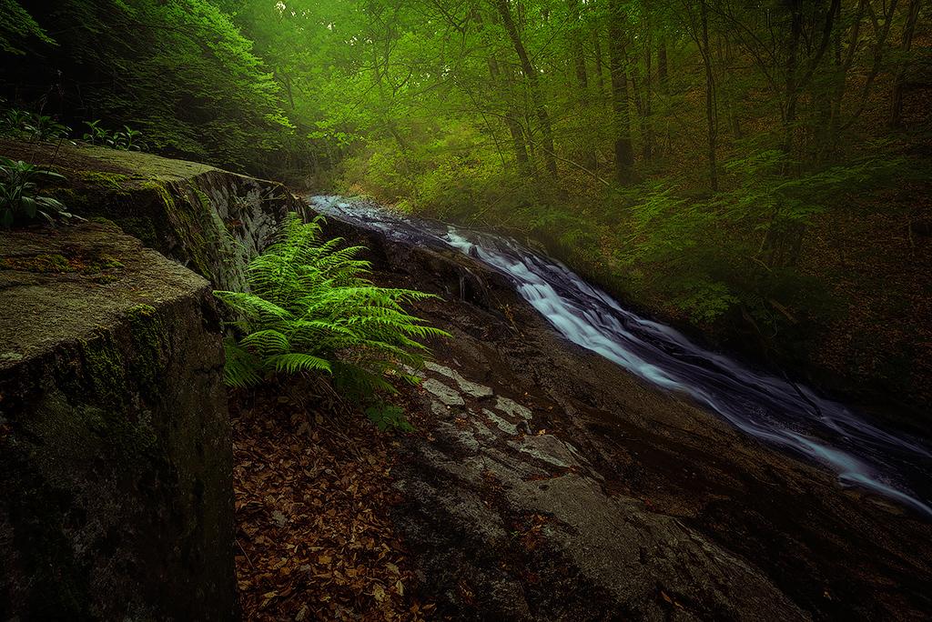 L'alè del bosc