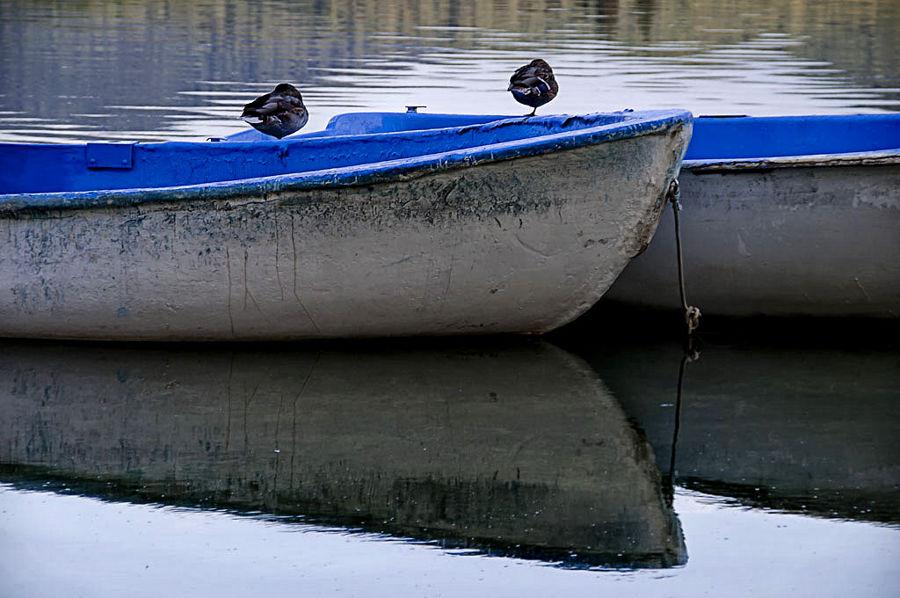 Barques i ocells