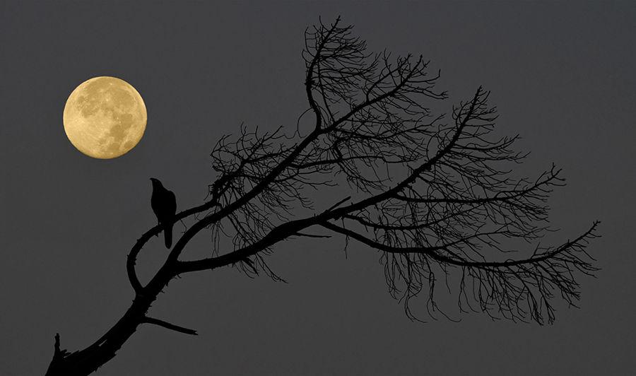 Observant la lluna