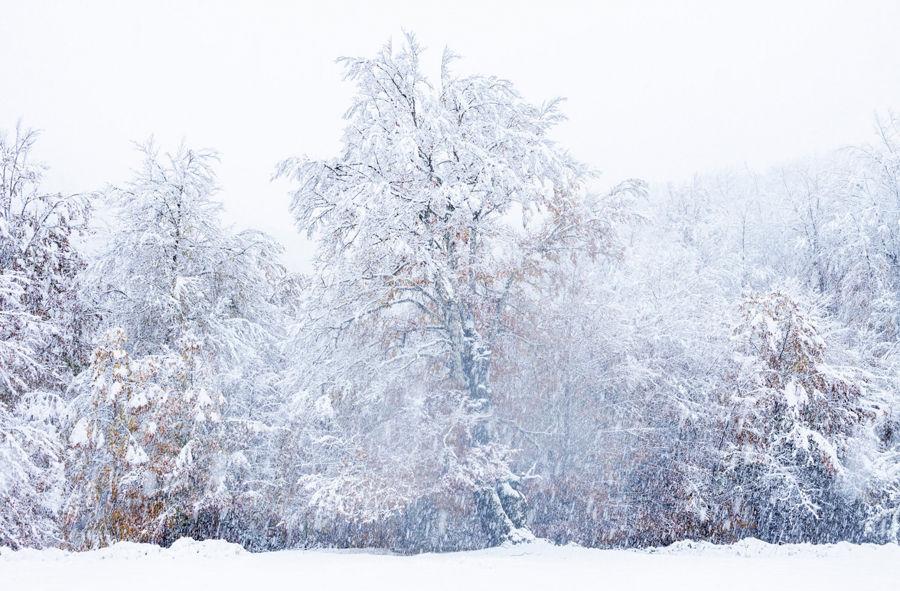 Neu de tardor