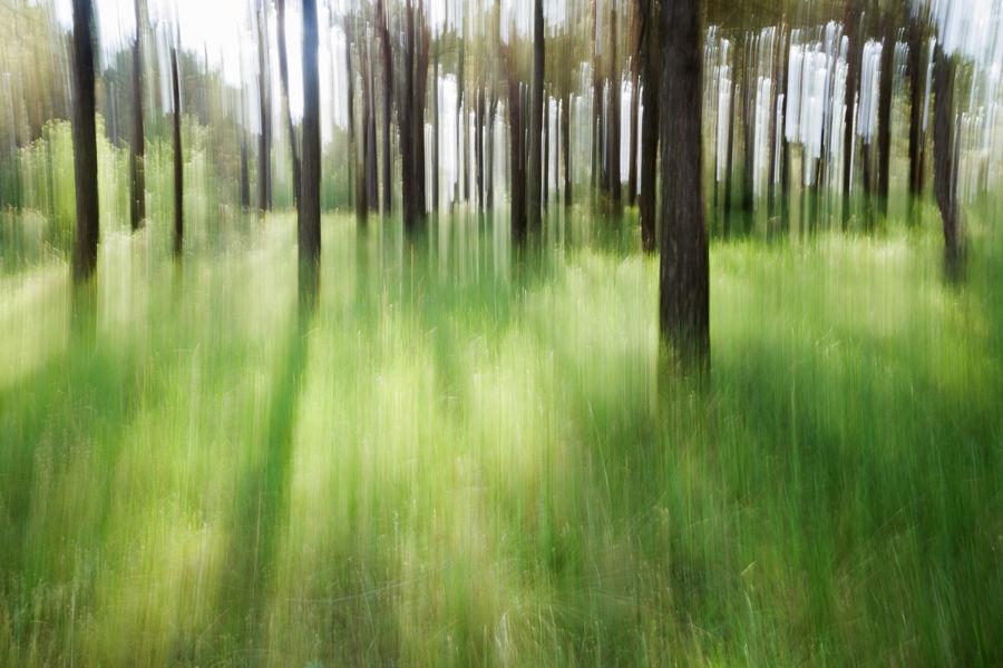 Bosc Pintat