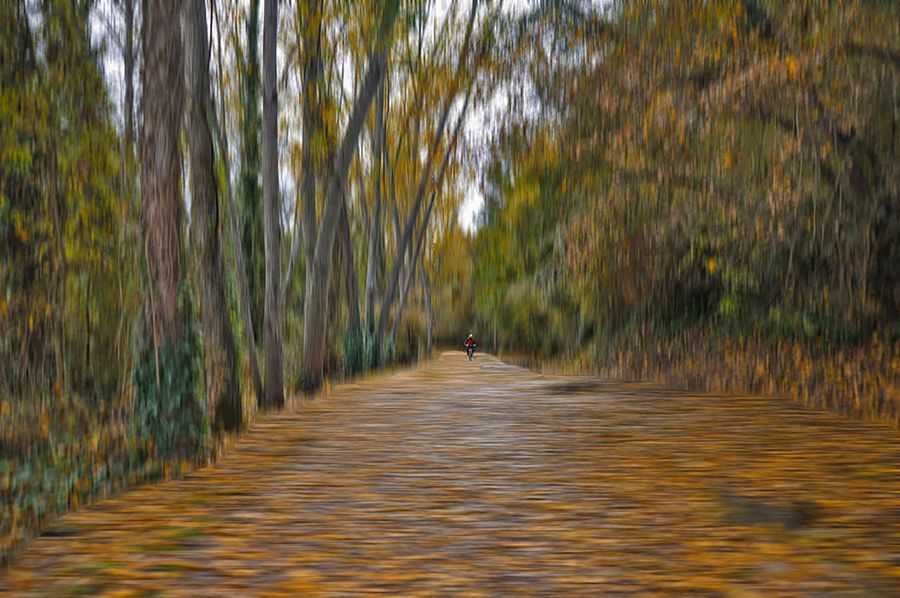 Camí Tardorenc