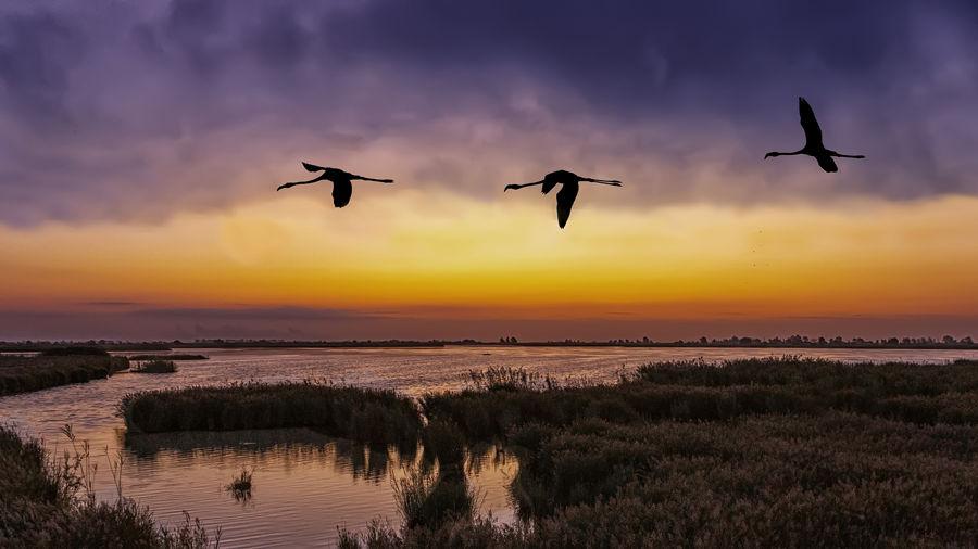 Flamencs al Delta