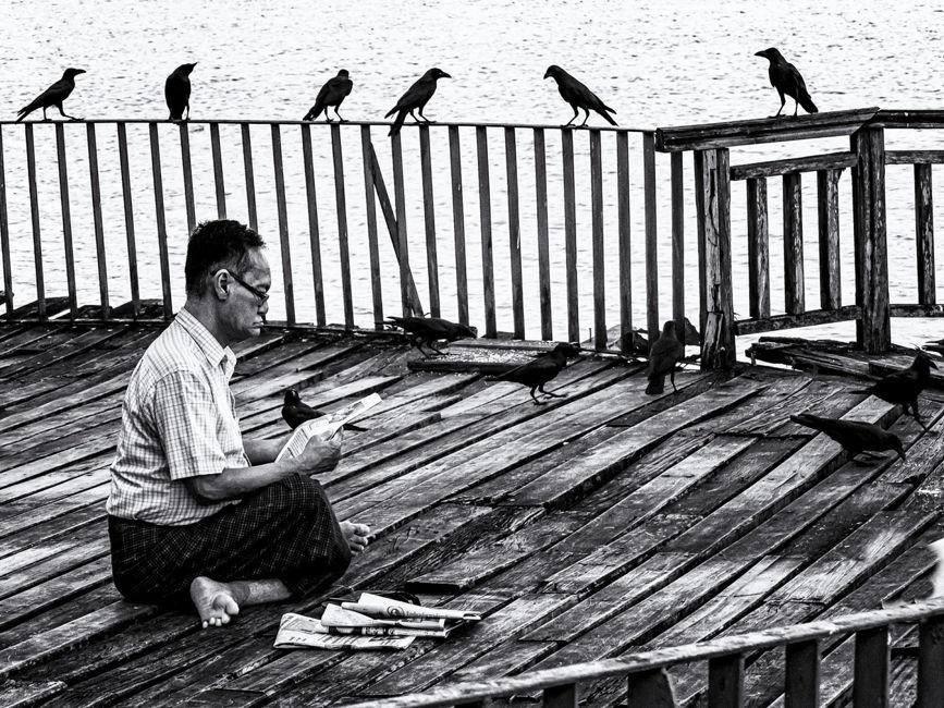 Els ocells