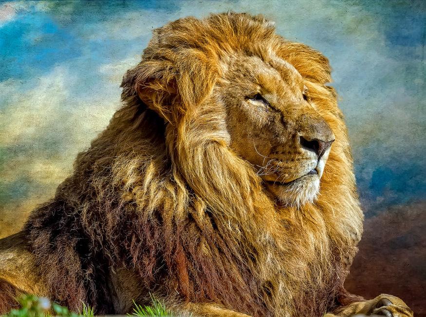 Retrato Rey Leon