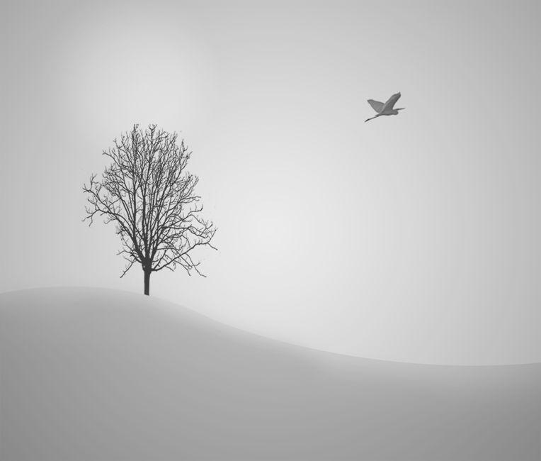 arbre - ocell