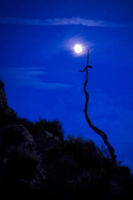Luna en cruz