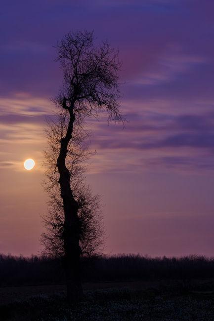 Luz de Luna .
