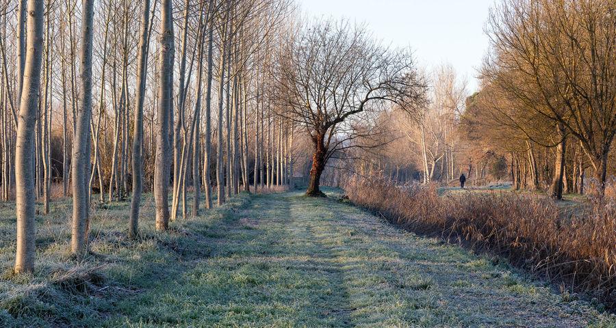 Paseig entre arbres
