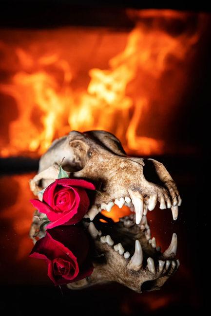 Skull, rose n' fire