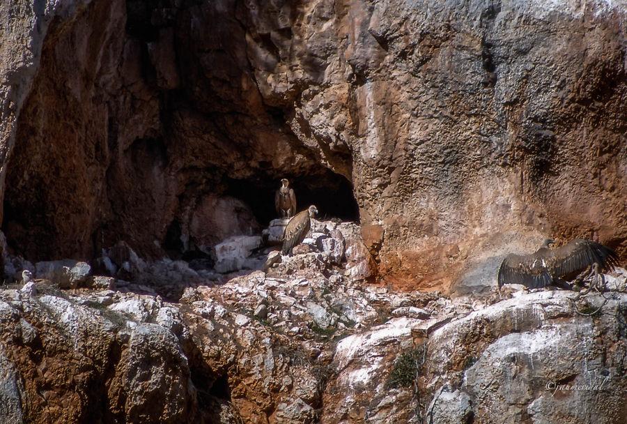 Voltonera a las Hoces del rio Piedra