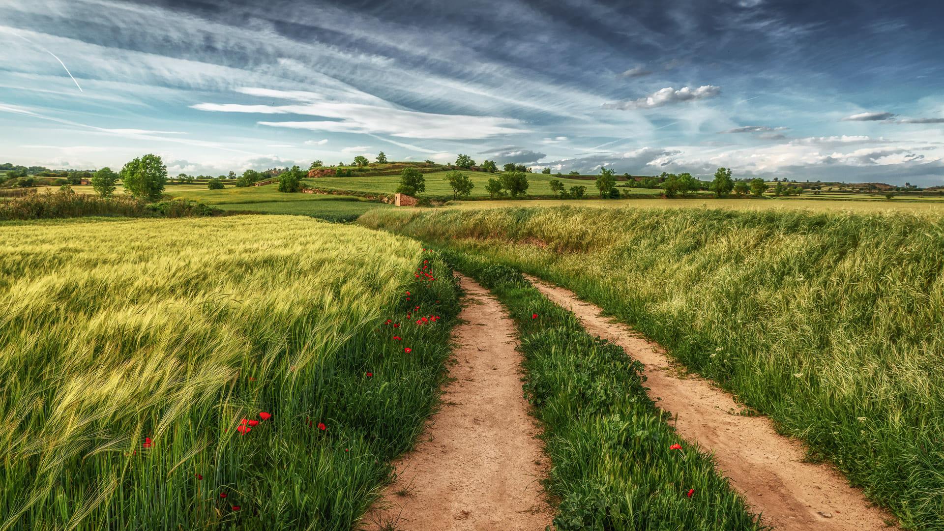 Camino y Campos de trigo