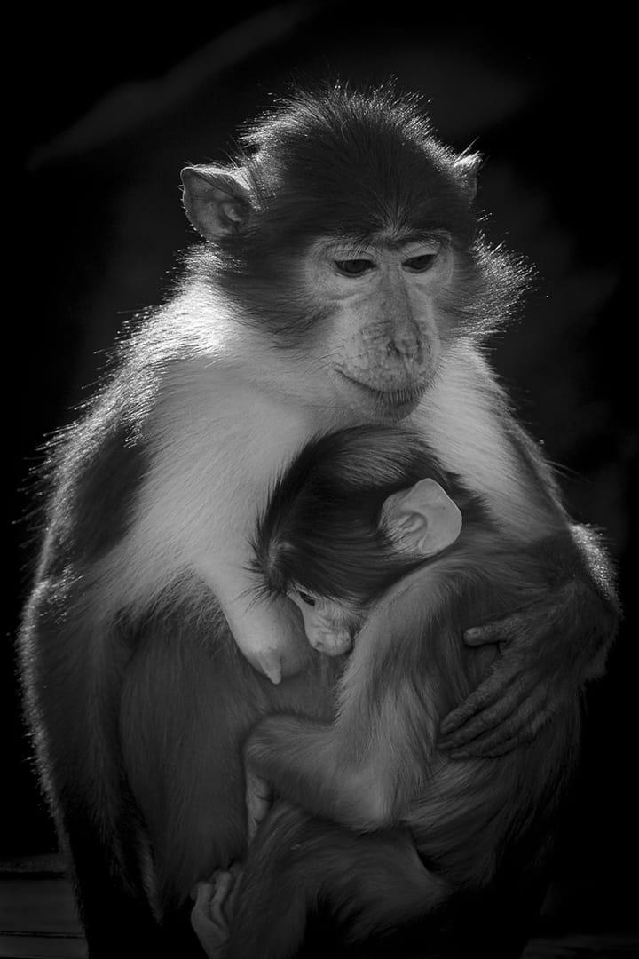 Amor matern