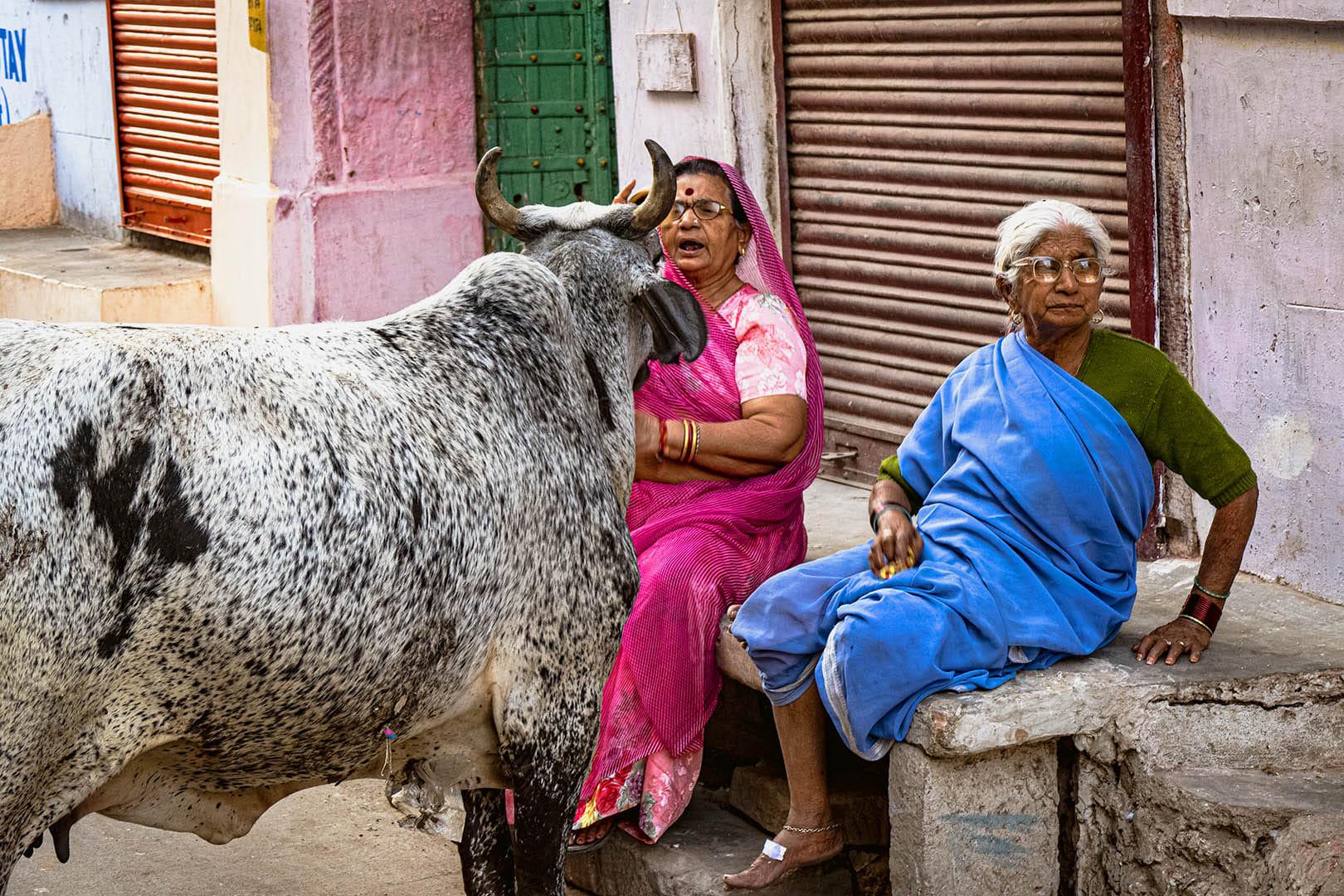 Dialogo de vaca