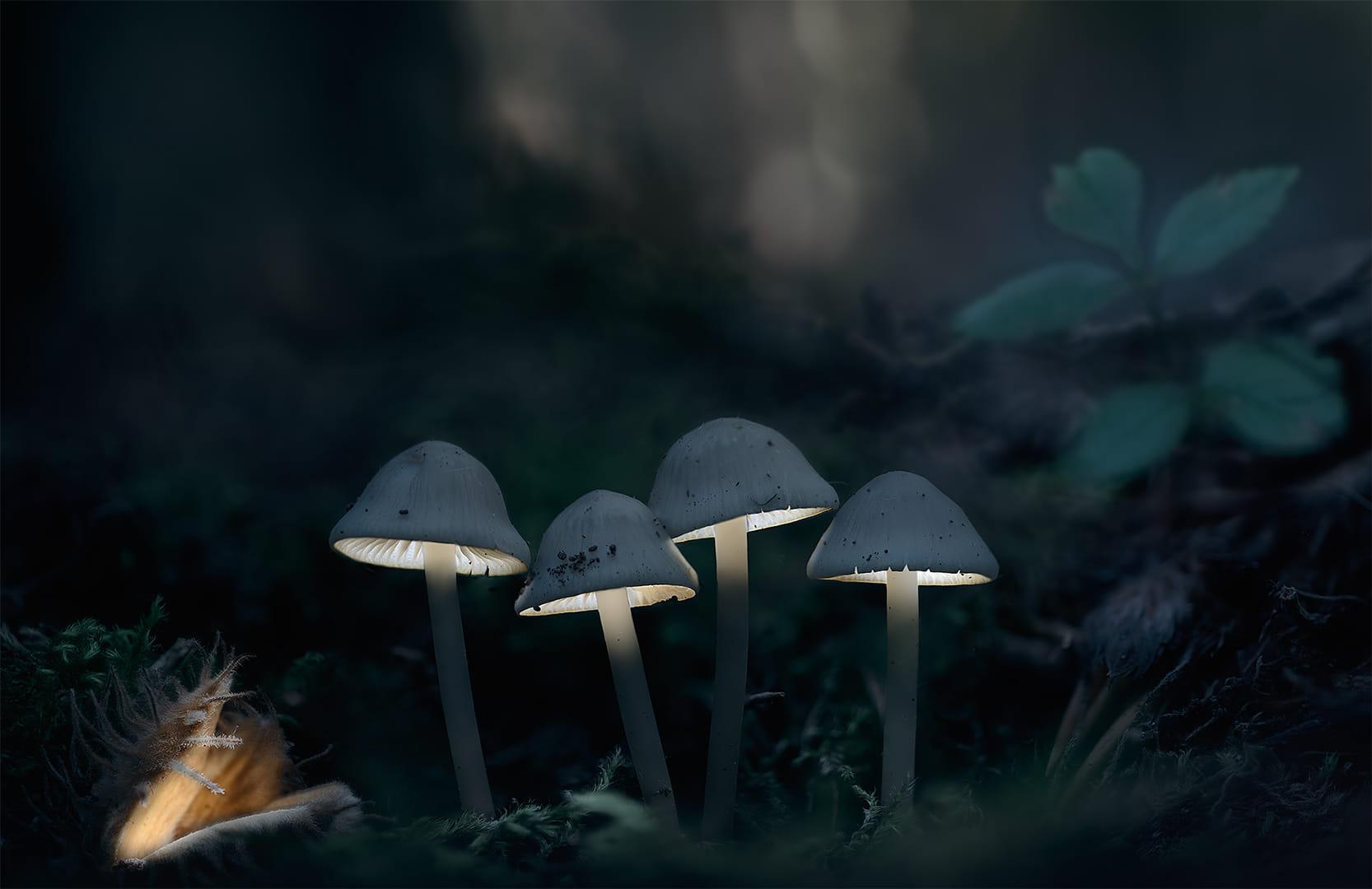 Misteris del Bosc
