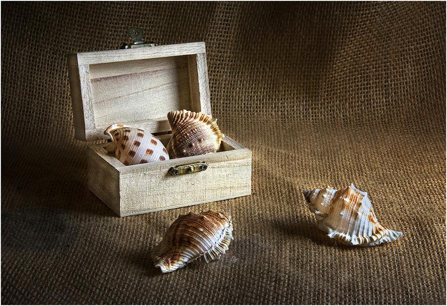 Cargols de mar