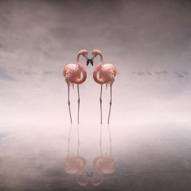 Pink twins