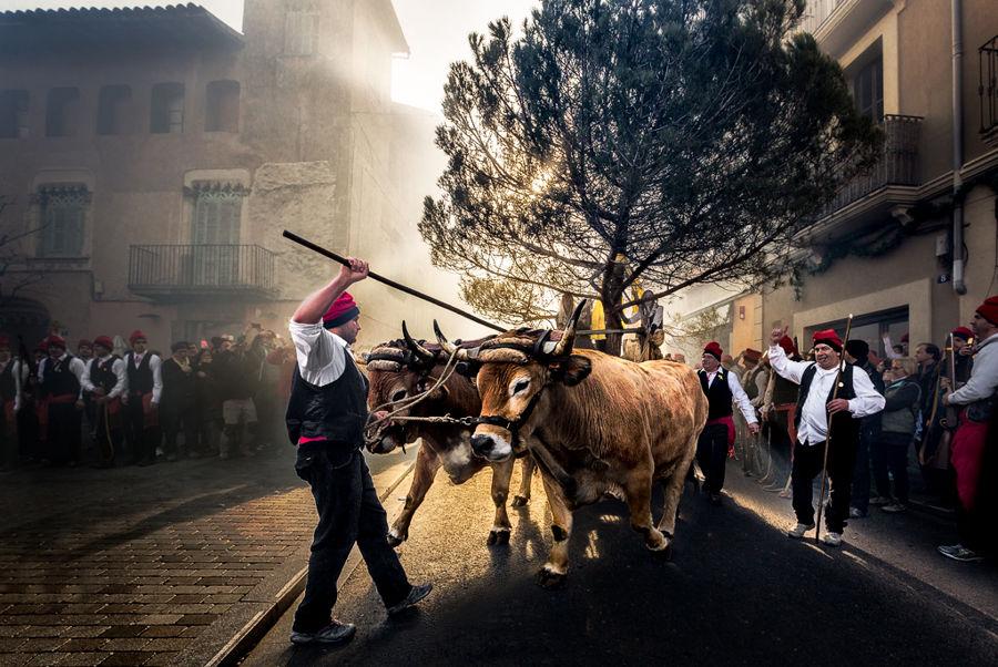 Festa del Pi bous Centelles