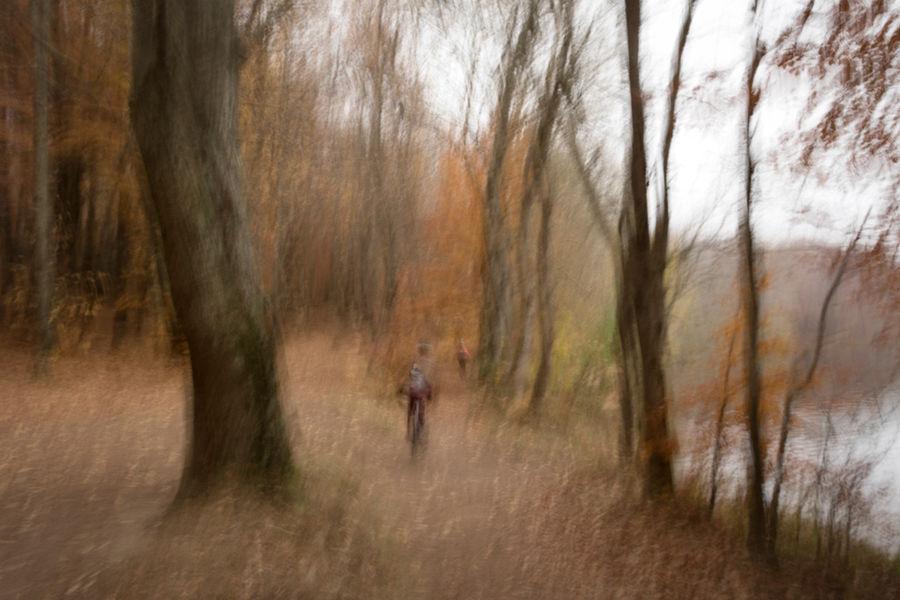 En el bosc
