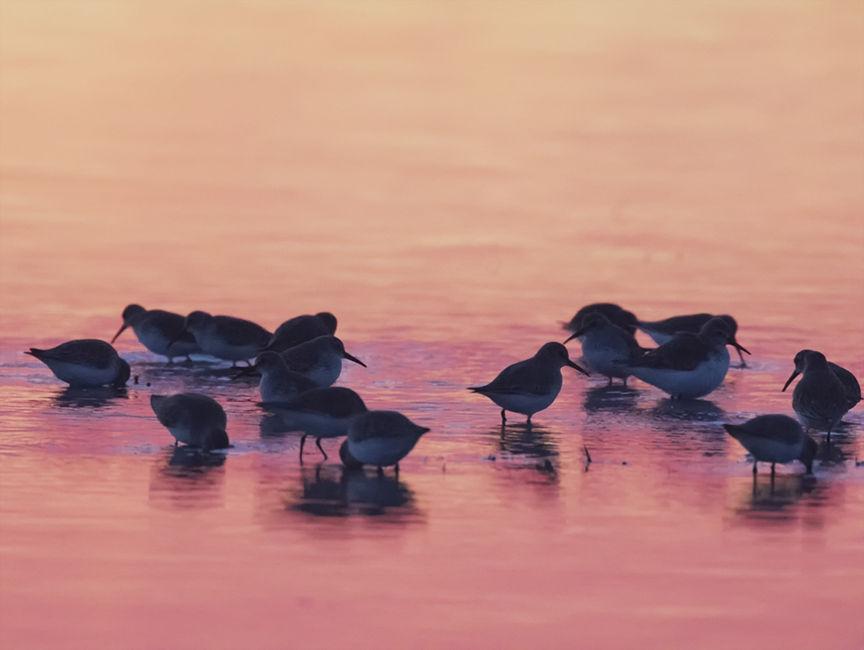despertar rosat al Delta