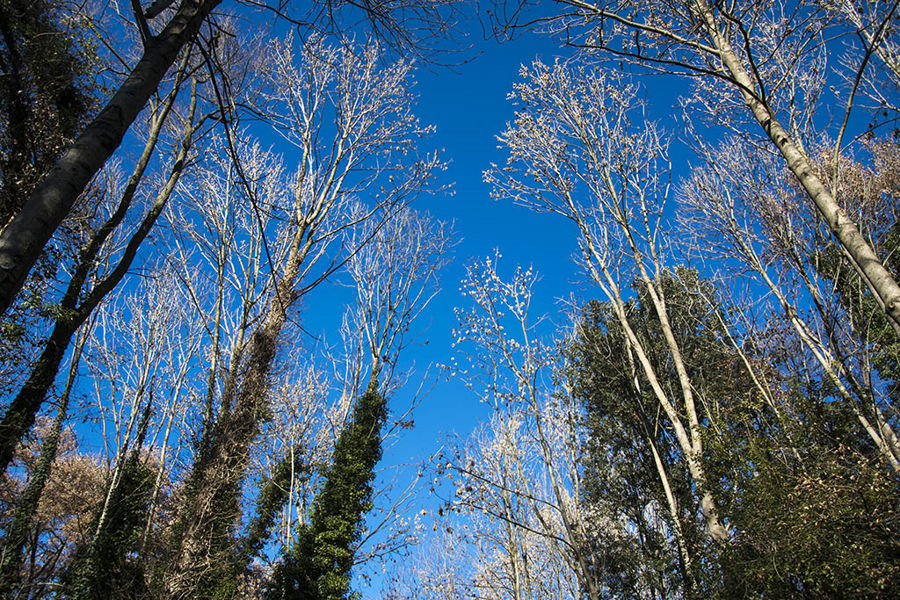 Entre arbres
