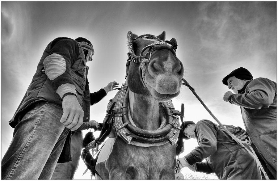 Preparant el Cavall
