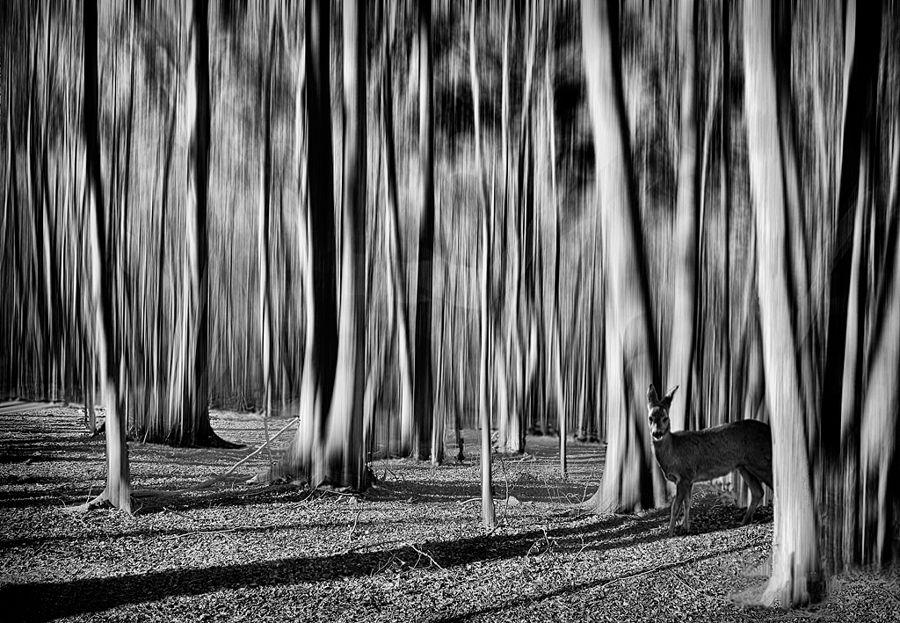 Encís al bosc