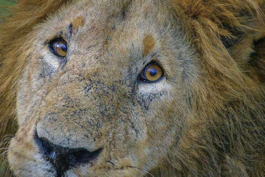 La mirada del rei
