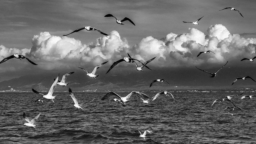 Ocells marins