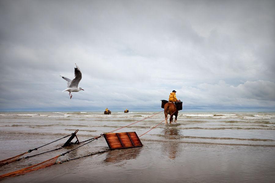 Pesca amb cavalls 2