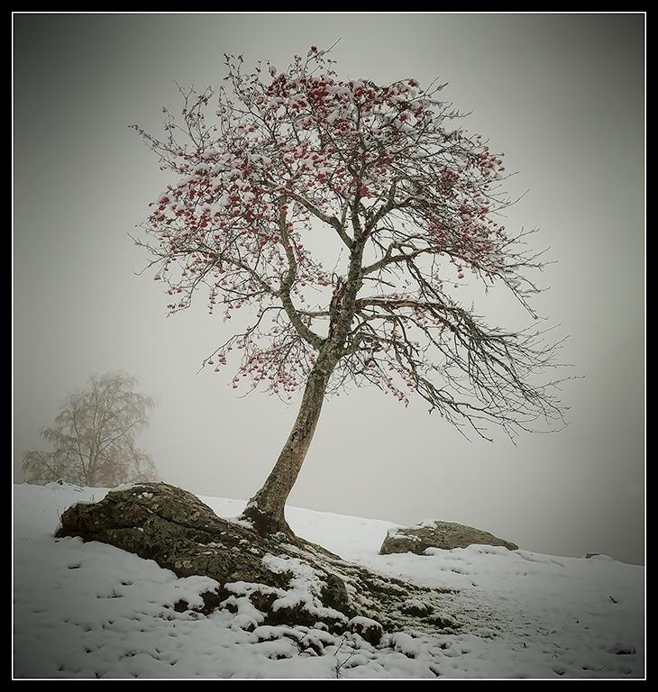resistint l'hivern