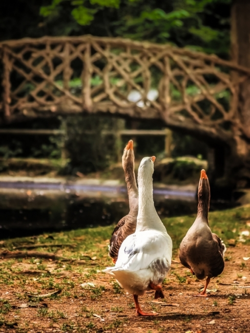 Parc municipal d'Olot, el joc de l'oca