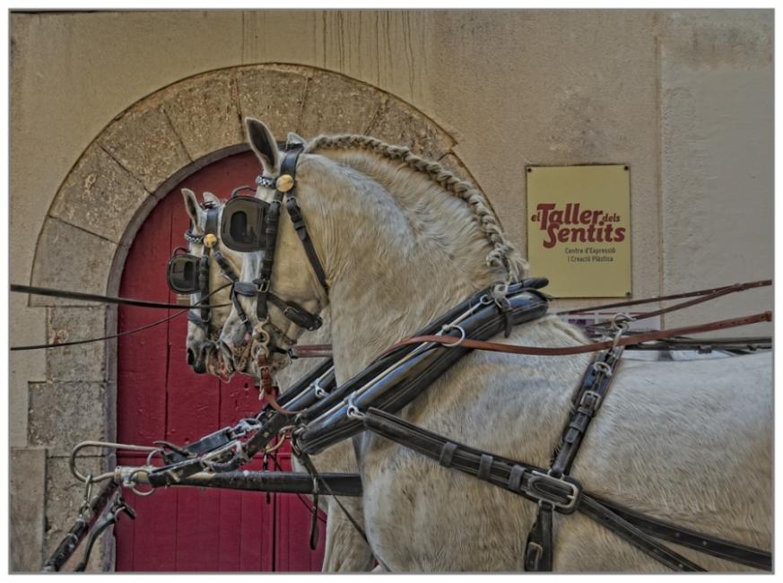 Cavalls Blancs