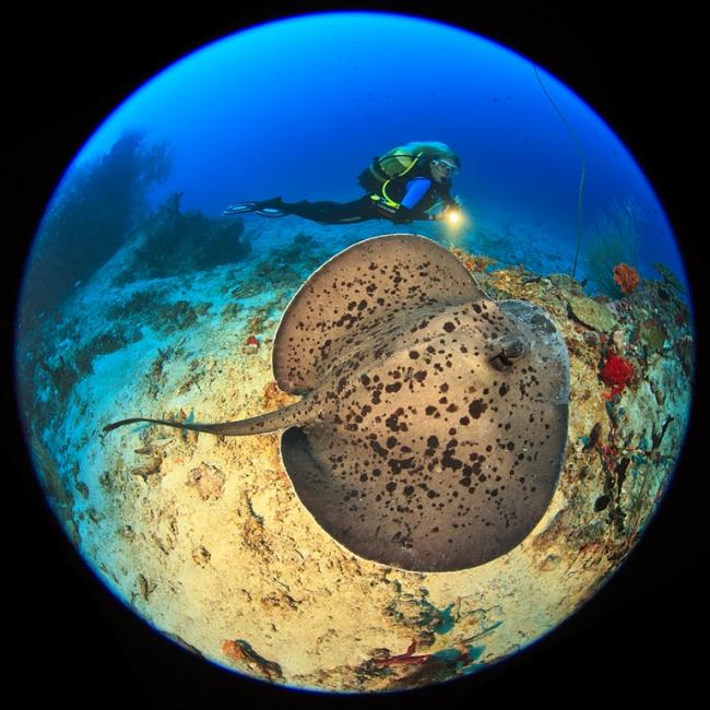 Planeta submarí