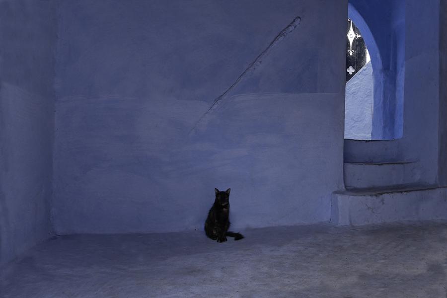 un gat