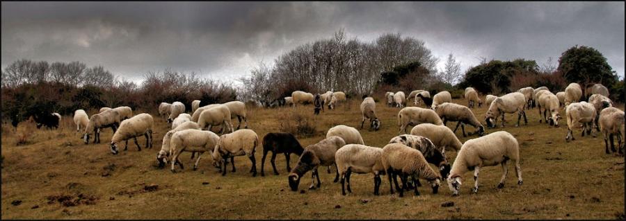 El ramat