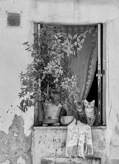 Historias de una ventana