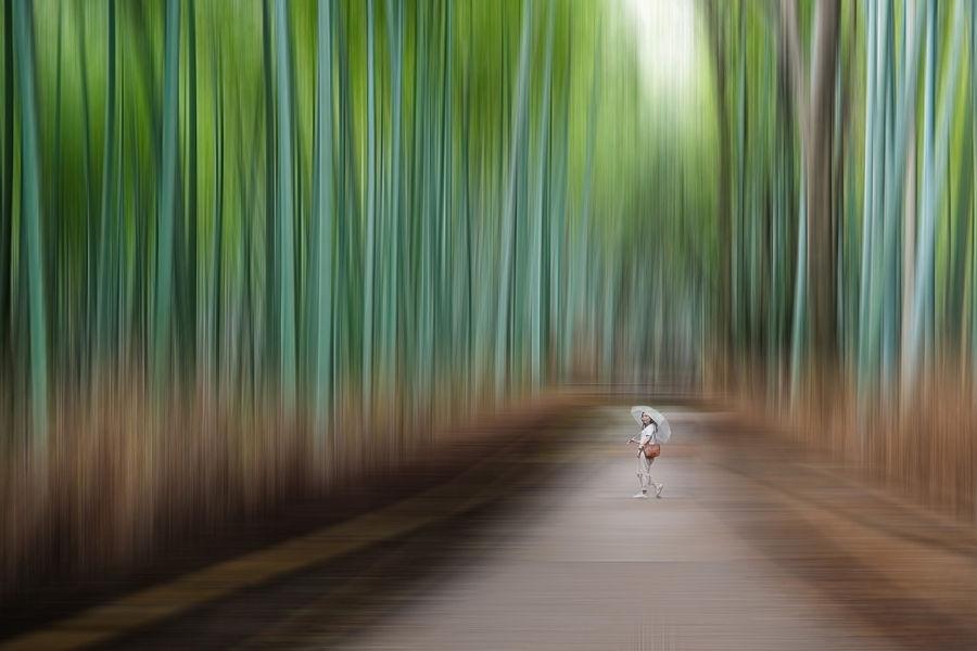Bosc de bambú