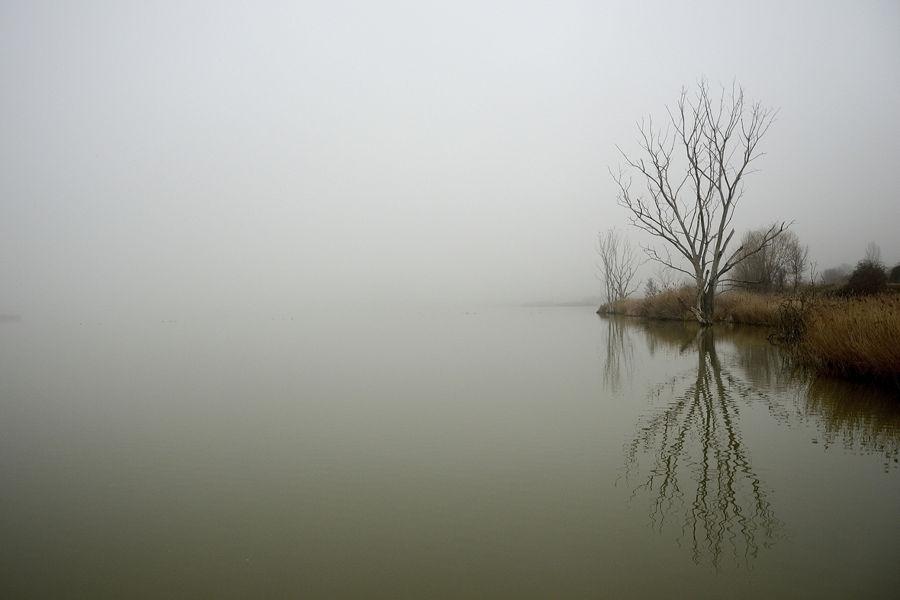 Silenci d'hivern, la boira s'esvaeixSilenci d'hivern