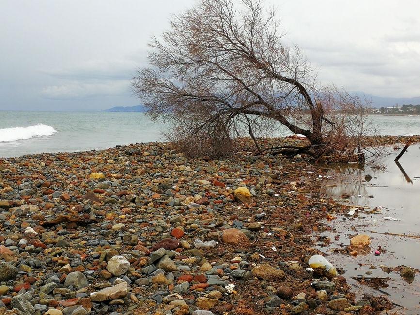 arbre banyistaarbre i platja