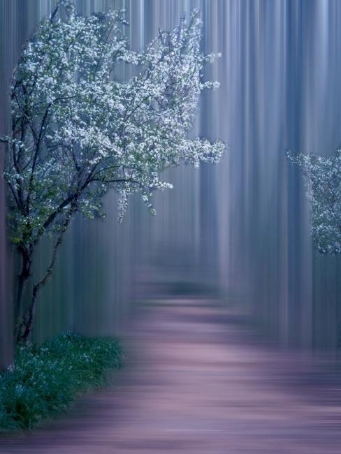 matinan al bosc