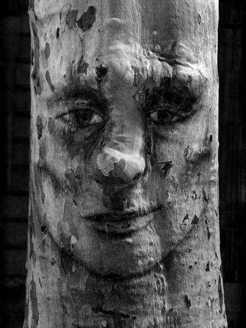La cara de l'arbre