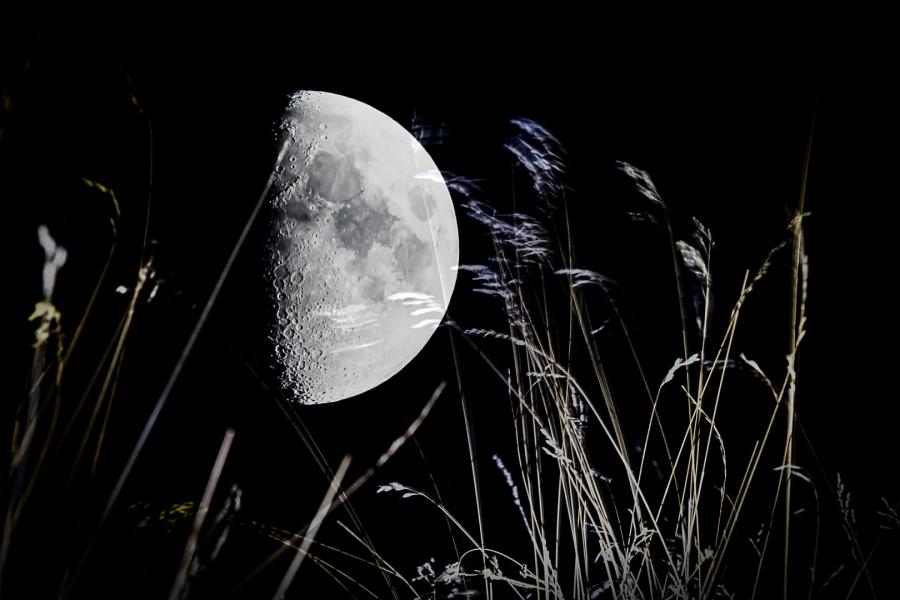La lluna entre la herba
