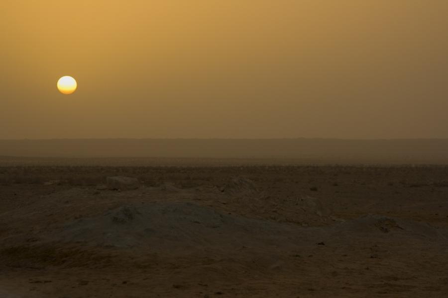 Posta de Sol enmig de res