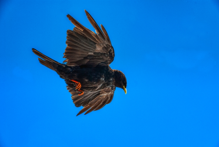 SWISS BIRD TWO