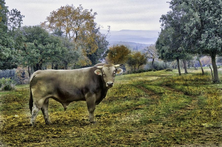 """""""RAMADERIA I NATURA"""" - L'Esquirol - Osona"""