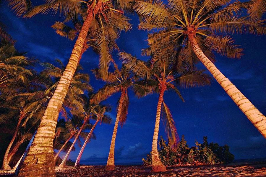 Noche de Madagascar