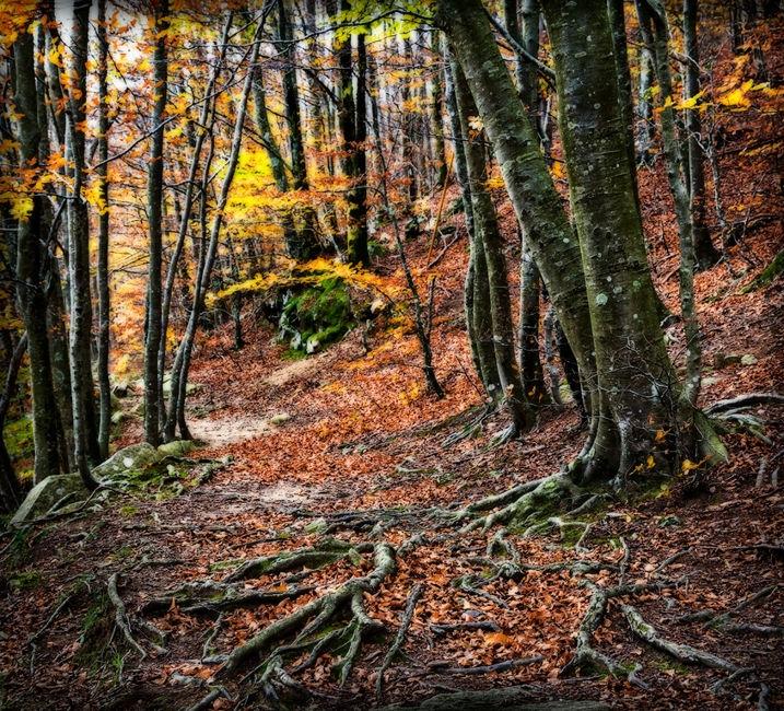 Bosque mágico 2